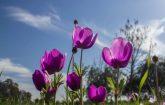 Serinyol'dan Bahar Kareleri